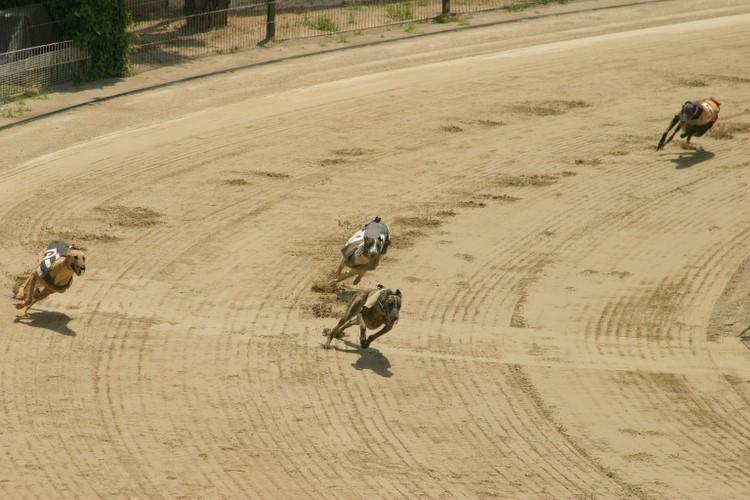 Ebro Greyhound Track