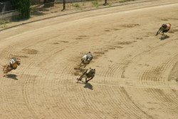 Ebro Greyhound Track Rest