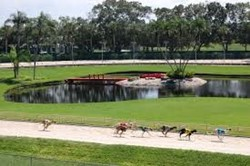 Naples Fort Myers Greyhound Track Rest