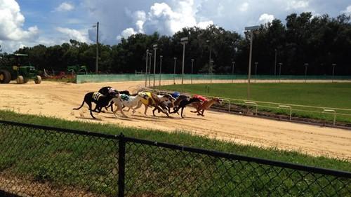Pensacola Greyhound Track image