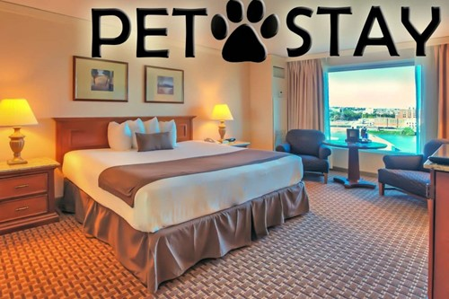 Petstay Premium Room At Harrah's Council Bluffs