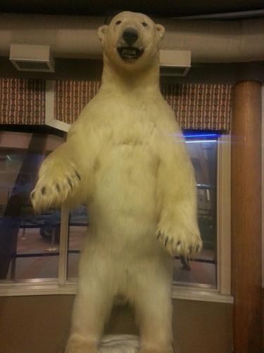 Bear Claw Casino image
