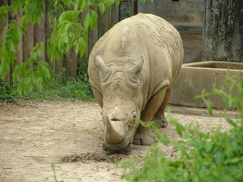 Jackson Zoo image